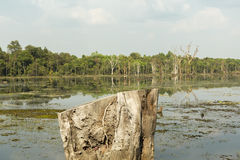 Dead tree trunk in Neak Pean lake near Angkor Wat. Cambodia. Dead tree trunk with the Neak Pean lake in the background, part of Khmer Angkor temple complex Stock Image