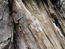 Grey Weathered Dead Tree Trunk stock images