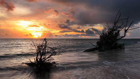 Dead tree trunk in sea tide stock footage