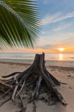 Dead tree trunk on tropical beach Royalty Free Stock Photos