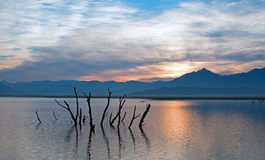 Dead tree trunks and branches poking out of drought stricken Lake Isabella at sunrise in the Sierra Nevada mountains in Central Ca Stock Images