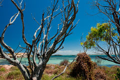 Dead tree trunks. Over the blue sea background Royalty Free Stock Photo