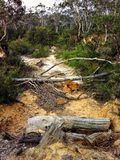 Dead tree trunks on a sandy path in the Australian bush Stock Photography