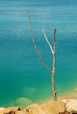 Dead tree in water Royalty Free Stock Photos