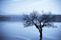 Dead tree on water Stock Photography
