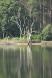Dead tree in the water Royalty Free Stock Photography
