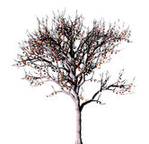 Dead tree on a white. stock illustration