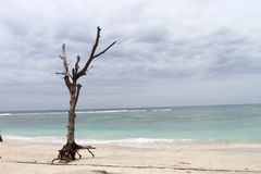 Dead tree at White Sand Beach Stock Images
