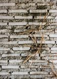 Dead tree with white wall background. Royalty Free Stock Photos