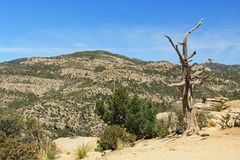 Dead Tree on Windy Point Vista on Mt. Lemmon. Weathered dead Tree, Windy Point on Mount Lemmon in Tucson, Arizona, USA in the Santa Catalina Mountains located in Royalty Free Stock Photos