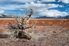 Dead tree on withered field with background of Sierra Nevada mou Royalty Free Stock Images