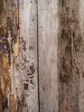 Dead tree wood texture. Wood dead tree texture pattern Royalty Free Stock Images