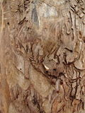 Dead tree wood texture Royalty Free Stock Images