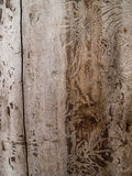 Dead tree wood texture. Wood dead tree texture pattern dead tree bugs carpenter traces of bark beetle Royalty Free Stock Image