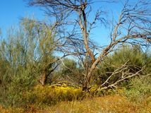 Dead tree. Yellow wild flowers growing around a dead tree Stock Photography
