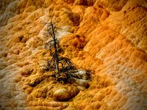 A dead tree at Yellowstone& x27;s Mammoth Hot Springs Royalty Free Stock Photography