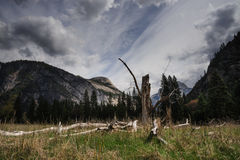 Dead Tree: Yosemite Valley royalty free stock image