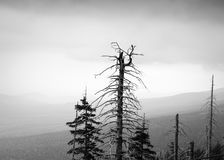 Dead trees. Over clouded mountains Stock Photography