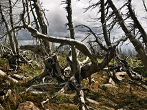 Dead trees. Trees after fires and natural disasters stock images