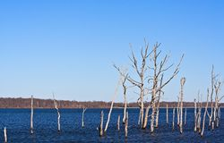 Dead Trees 2. A reservoir filled with dead trees Stock Photos