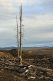 Dead trees. Royalty Free Stock Photography