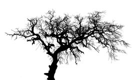 Dead trees. On a white background Stock Photography