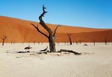 Dead trees. In Dead Vlei - Sossusvlei, Namib desert, Namibia stock images