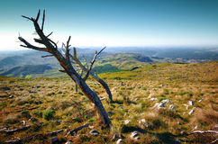 Dead Trees. Wilderness landscape with dead trees in Montejunto Hills - Portugal Royalty Free Stock Photography
