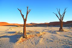 Dead trees Stock Images