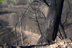 Dead trees Stock Image