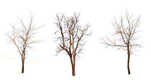 Free Dead Trees Royalty Free Stock Photography - 33774367
