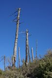 Dead trees Stock Photography
