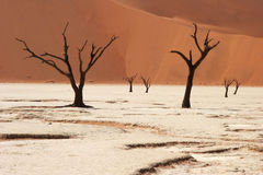 Dead Trees. Dead vlei valley in Namibia close to Sossusvlei Stock Image