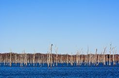 Dead Trees. A reservoir filled with dead trees Stock Photography