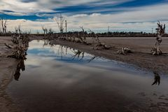 Dead trees in the abandoned city of Epecuen. Flood that destroyed the city and left it in ruins.Ghost city. Dead trees in the abandoned city of Epecuen. Flood royalty free stock photography