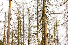 Dead Trees Royalty Free Stock Images