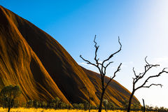 Ayers Rock (Uluru) Part and dead Trees Royalty Free Stock Photography