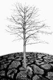 Dead trees on the barren soil Royalty Free Stock Photo