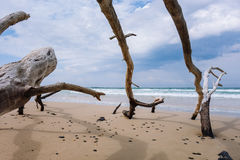 Dead trees on the beach. With a cloudy sky Stock Photography