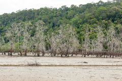 Dead trees in beach at low tide Stock Photos