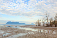 Dead trees in beach at low tide Royalty Free Stock Photo