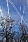 Dead trees and blue sky. Autumn trees on the background of blue sky with airplane traces Royalty Free Stock Image