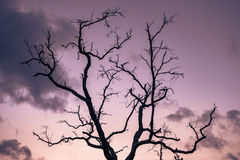 Dead trees. Boil perennials die at a time when the sky changes color Stock Images