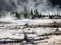 Yellowstone National Park, Wyoming, United States Royalty Free Stock Photo