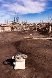 Dead trees in the city of Epecuen. Desolate landscape without people. Natural disaster stock photography