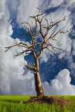 Dead trees in a cloudy sky background. Royalty Free Stock Photos