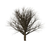 Dead trees of computer graphics in create. Dead trees of computer graphics in create isolated on white background Royalty Free Stock Photos
