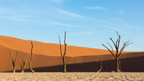 Dead trees at Daedvlei in Namibia Stock Images