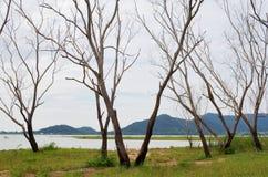 Dead trees in dam area Stock Image