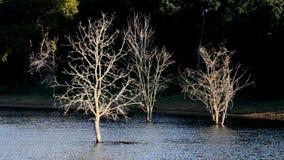 Dead trees in dam area. stock video footage